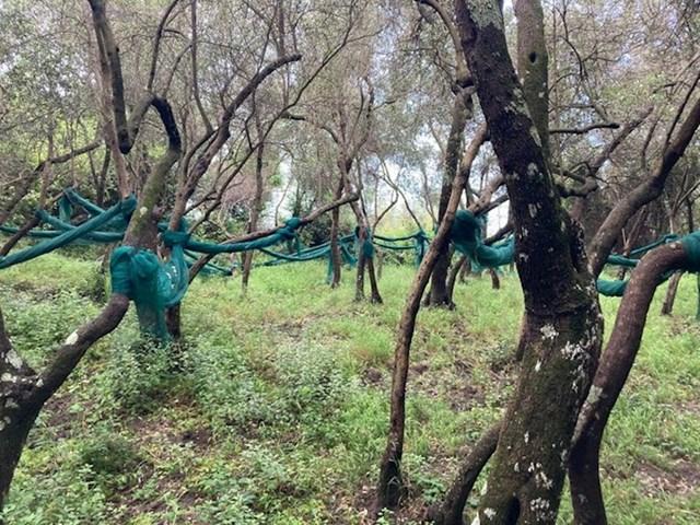 Pronašla sam ove mreže na stablima, čemu služe?
