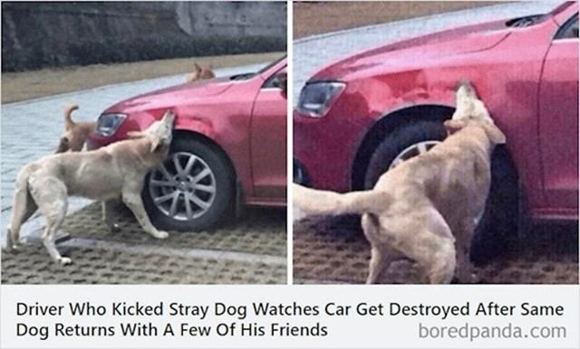Vozač je udario psa lutalicu koji se onda vratio s ekipom i uništio mu auto