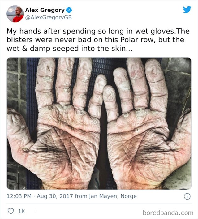 Ruke olimpijskog veslača