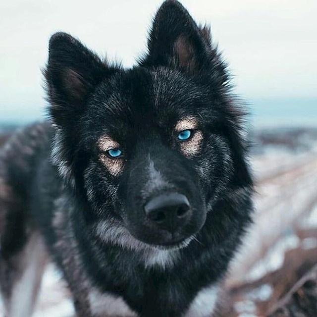 Prekrasna kombinacija tamne dlake i plavih očiju