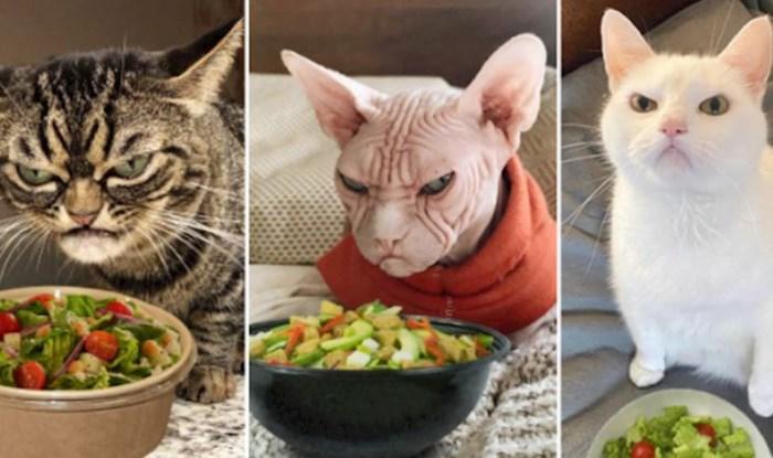 Ekipa ispred svojih mrzovoljnih mačaka stavlja zdjele sa salatom, fotke su urnebesne