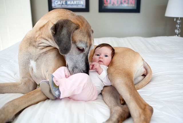 U nekom tenutku će svi dobro doći kao dadilje pa čak i psi