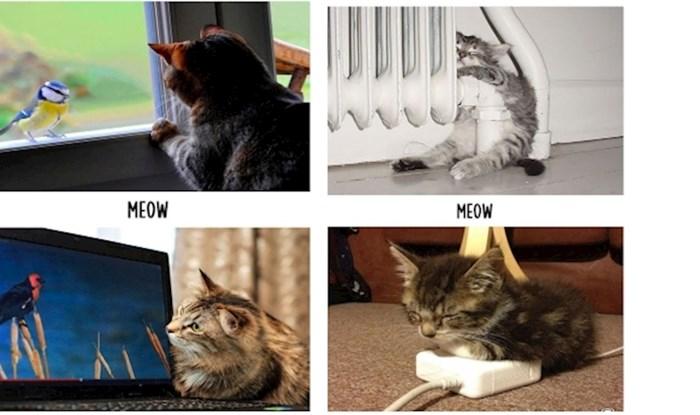 Mačji život prije i poslije tehnologije