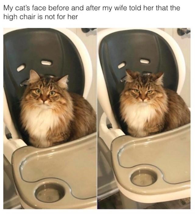 Izraz lica ove mačke nakon što su joj rekli da ova stolica nije za nju