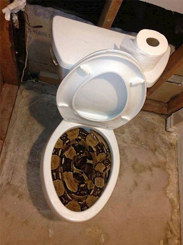 U Australiji se preporuča dobro pogledati prije sjedanja na WC školjku