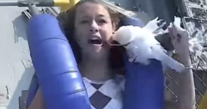 Viralna snimka iz SAD-a: Usred vožnje vlakom smrti u glavu joj se zabio galeb