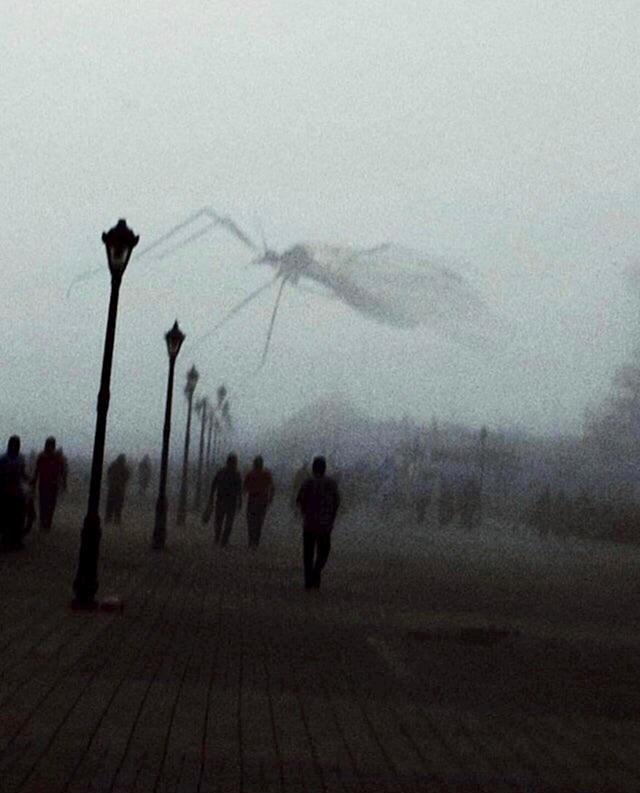 Nije kraj svijeta, komarac je letio ispred aparata točno u trenutku nastanka slike