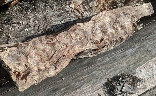 Pilio je drvo i skužio da izgleda isto kao kultna Van Goghova slika Zvjezdana noć