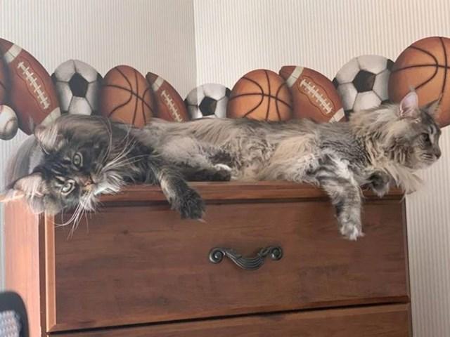 Dvoglava mačka??