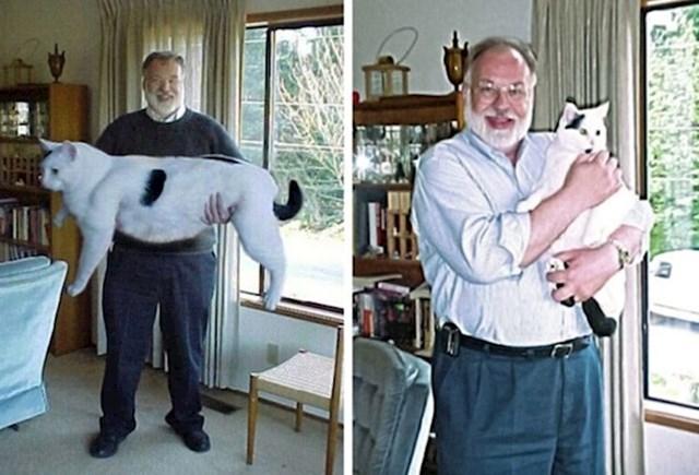 Ogromna mačka