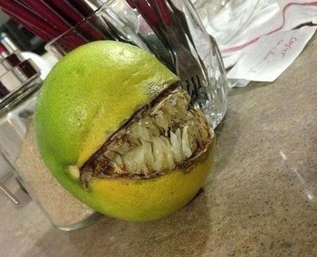 Ova naranča nije baš prijateljski nastrojena