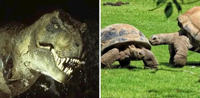 Svi zvukovi dinosaura iz Jurskog parka su zapravo zvukovi kornjača