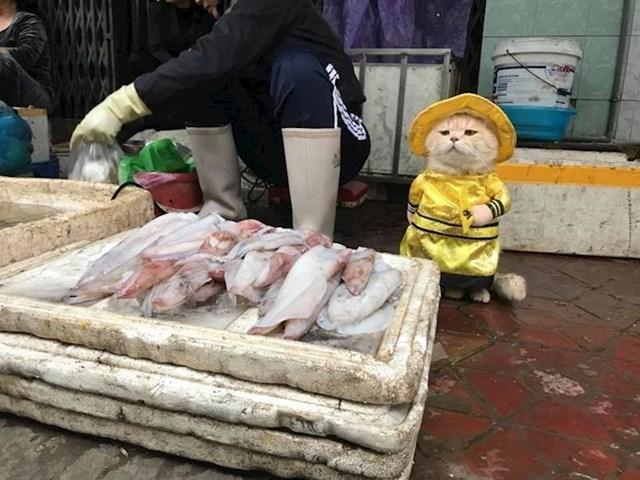 Pokušajte prestati gledati u ovu macu na vijetnamskoj tržnici
