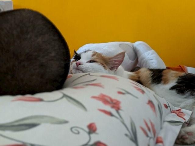 Suprug se vratio kući nakon par dana što je bio na putu i naša maca ga samo gleda dok spava