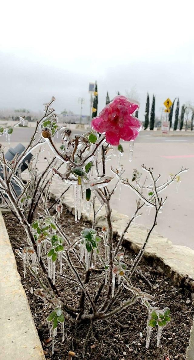 Izašla je vani nakon oluje i pronašla smrznuti cvijet