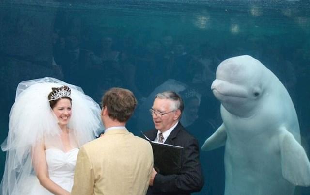 Ovaj kit obred shvaća ozbiljnije i dostojanstvenije od nekih ljudi koje poznajem