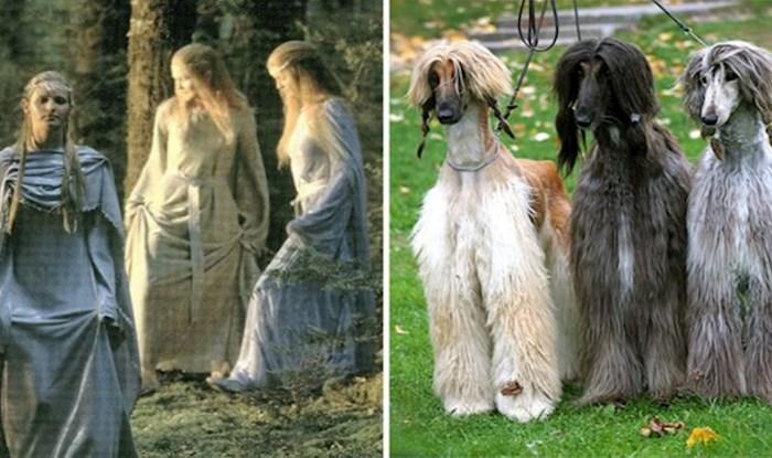 Ovi psi izgledaju identično kao glumci iz Gospodara prstenova, fotke su genijalne