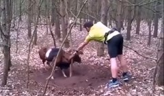 Biciklist je u šumi našao planinsku kozu kojoj su rogovi zapeli za stablo, snimka je prenapeta