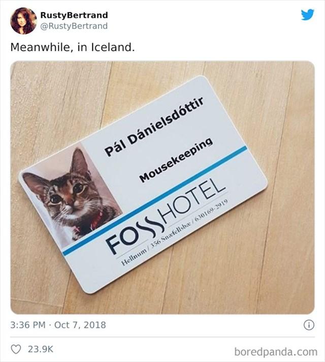 Hotel na Islandu ima posebnu iskaznicu za mačku hotela