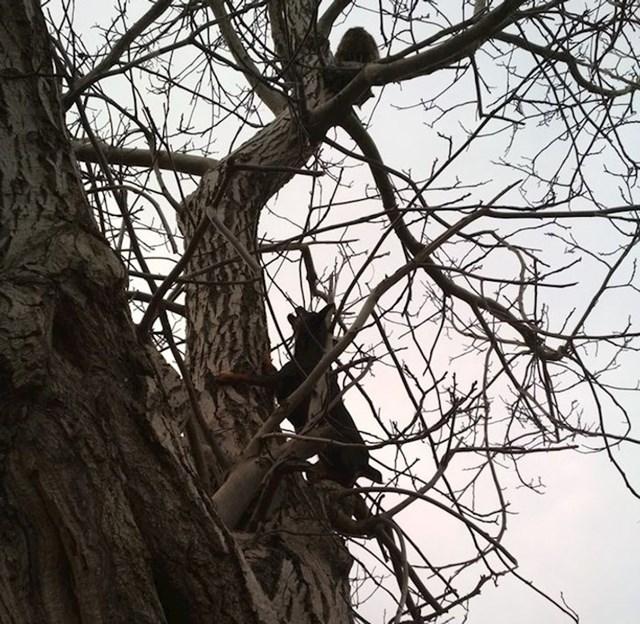 Ne znam je li netko obavijestio ovu mačku da se i neki psi mogu penjati na stablo
