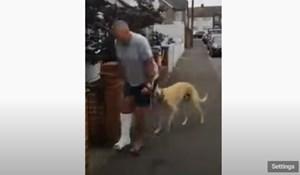 Potrošio je 400$ u veterinara da sazna zašto mu pas šepa, razlog će vas rasplakati