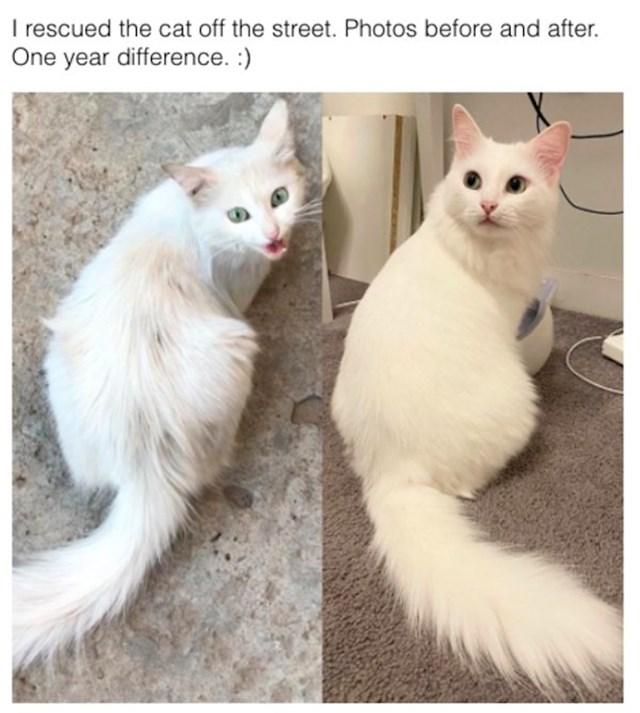 Maca prije nego su je spasili s ulice i godinu poslije