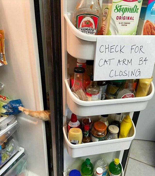 Provjeri viri li macina šapa prije zatvaranja vrata hladnjaka! Vidite li je vi?