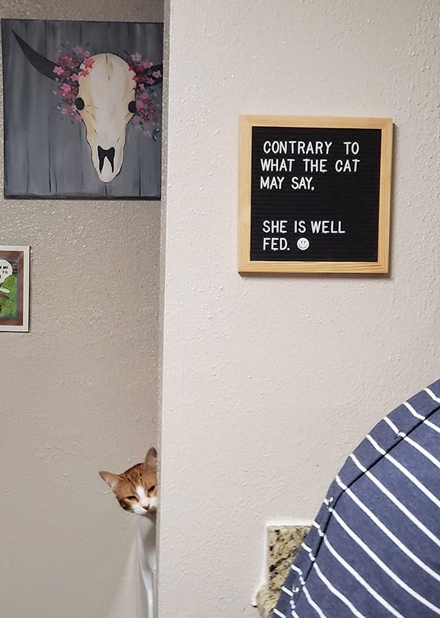 Unatoč tome što bi ona rekla, ova maca je jako dobro nahranjena.