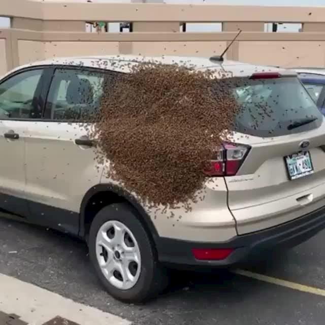 Nope. Kupit će novo auto