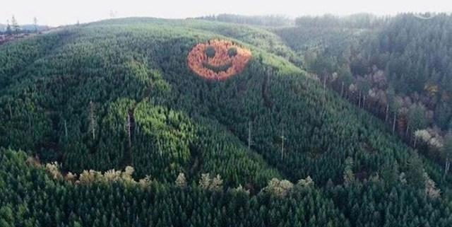 Svake jeseni na Oregonskoj obali, kad se lišće mijenja, ova slika izranja iz borove šume