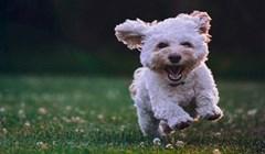 Jeste li se ikad pitali kome u slučaju razvoda pripada pas? Bivši bi mogli dijeliti skrbništvo