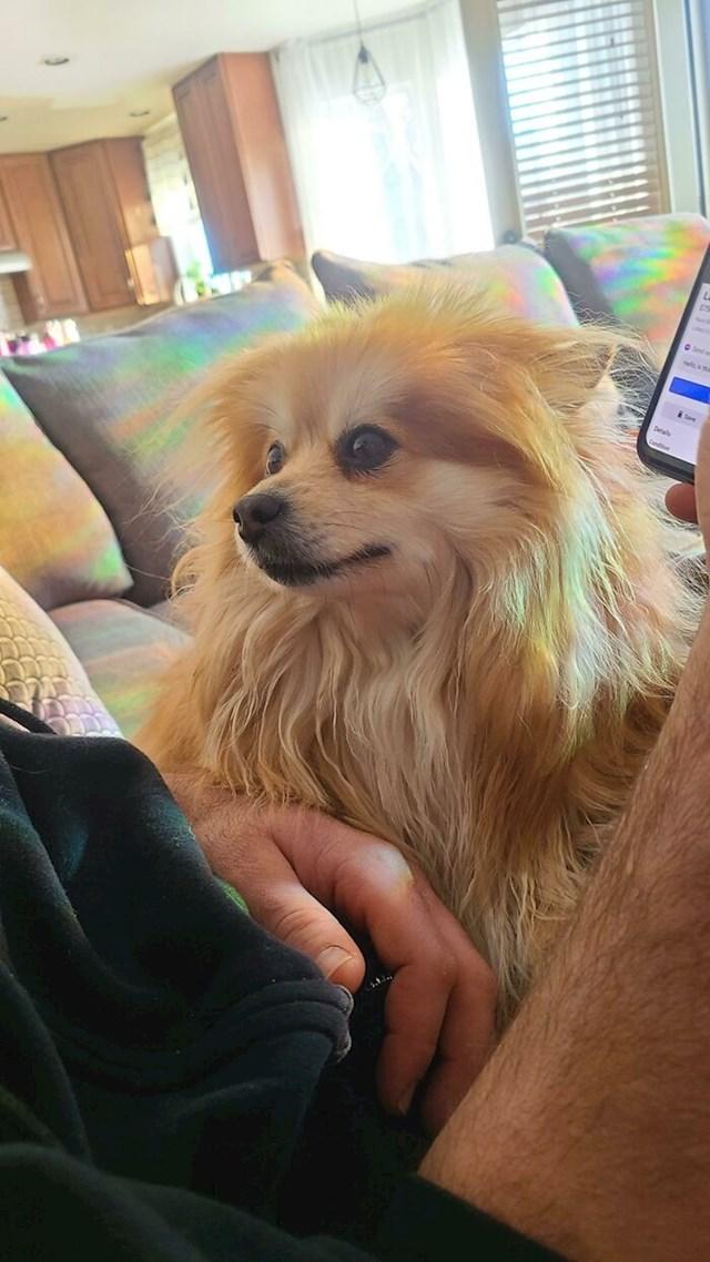 Da bar netko u mene ovako gleda kao naš pas  u mog supruga