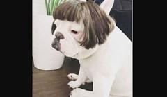 Ljudi dijele fotke svojih pasa kako nose vlasulje. Iznenađujuće su urnebesne