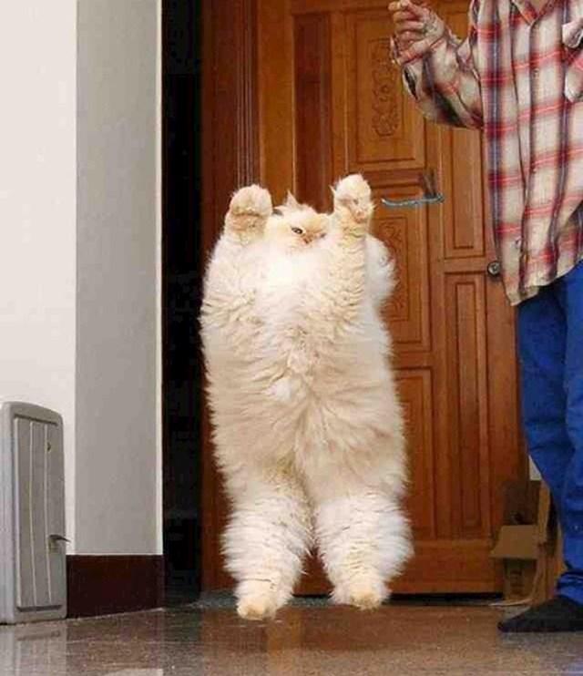 Naj-fluffy mačka na svijetu