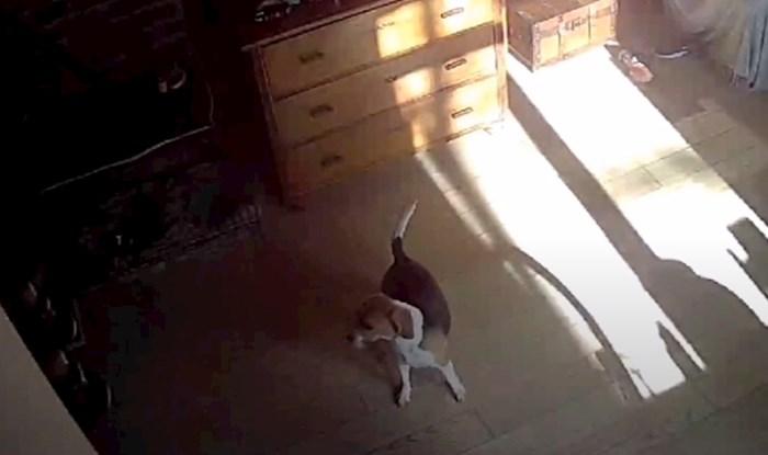 Dirljiva snimka iz Dugog Sela: Mladić utrčao spasiti pse kad je osjetio potres