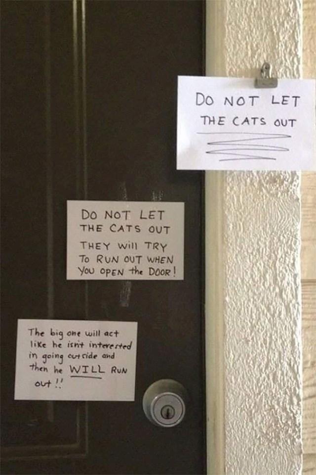 Natpis za majstora. Ne puštajte mace van. Pokušat će pobjeći ćim otvorite vrata. Veliki mačak će se praviti kao da nije zainteresiran za izlazak, a onda će brže bolje pobjeći.