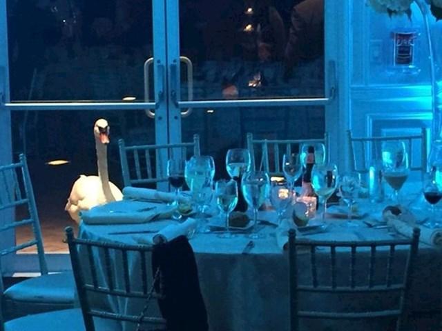 Bio sam na vjenčanju, a ovaj labud nije prestao zuriti u mene cijelu večer
