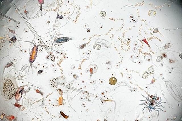 Kapljica morske vode pod mikroskopom