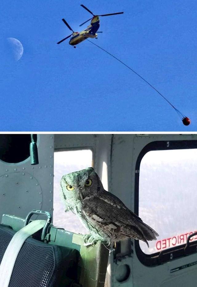 Sova je uletjela ravno u helikopter koji se borio protiv šumskih požara u Kaliforniji. Napila se par kapi vode i odletjela dalje.