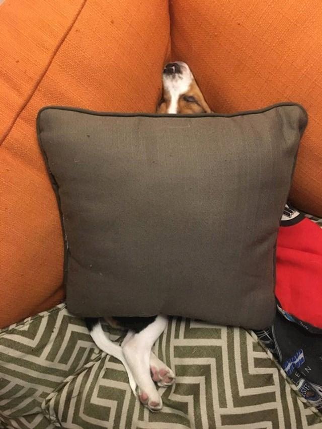 Je li ovo normalno ili je moj pas s greškom?