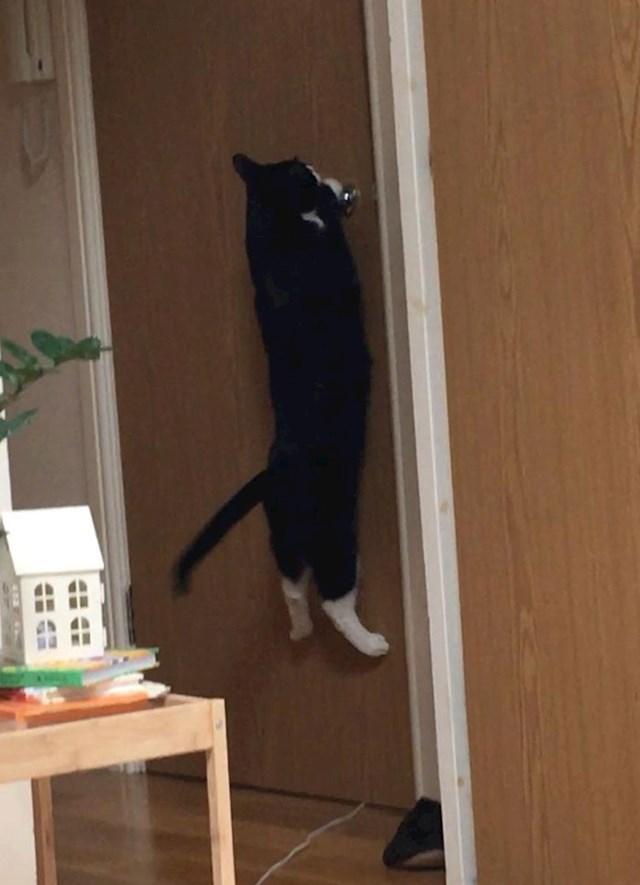 Dečko me uvjerava da moja mačka nije opsjednuta njime; ovo je ona kad on zatvori vrata od WCa