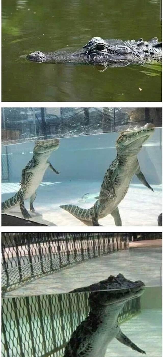 Mislili ste da plivaju horizontalno u vodi?