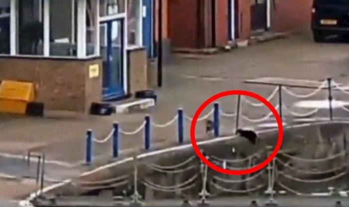 VIRALNI VIDEO Nespretna mačka se poskliznula i upala u Temzu, a onda se dogodilo nešto predivno