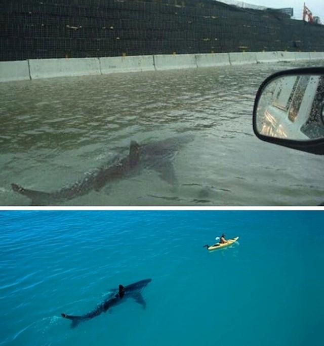 Morski pas na autocesti