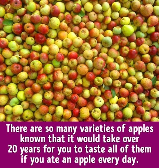 Na svijetu postoji toliko različitih vrsta jabuke da bi vam trebalo 20 godina svakodnevnog jedenja jabuka kako bi ih sve iskušali