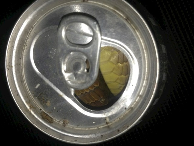 Čistio je nakon tuluma, mislio je da je netko ostavio puno pivo
