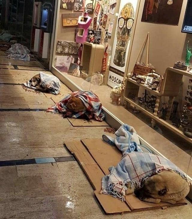 Mještani za vrijeme lošeg vremena pokrivaju pse lutalice pokrivačima.
