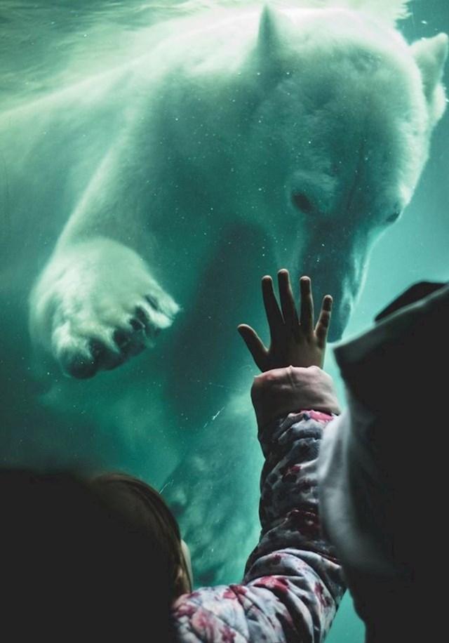 Polarni medvjed pozdravlja djevojčicu