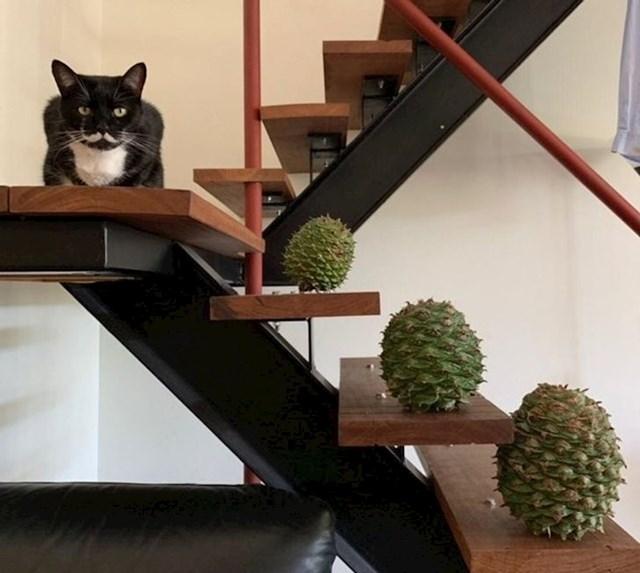 Maca s brkovima