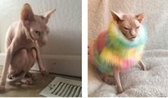 Što god mislili o njima, ovo su najljepši primjerci sfinks mačaka